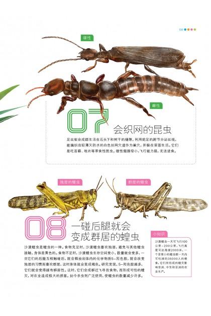 魔豆图文 13:秒懂昆虫123